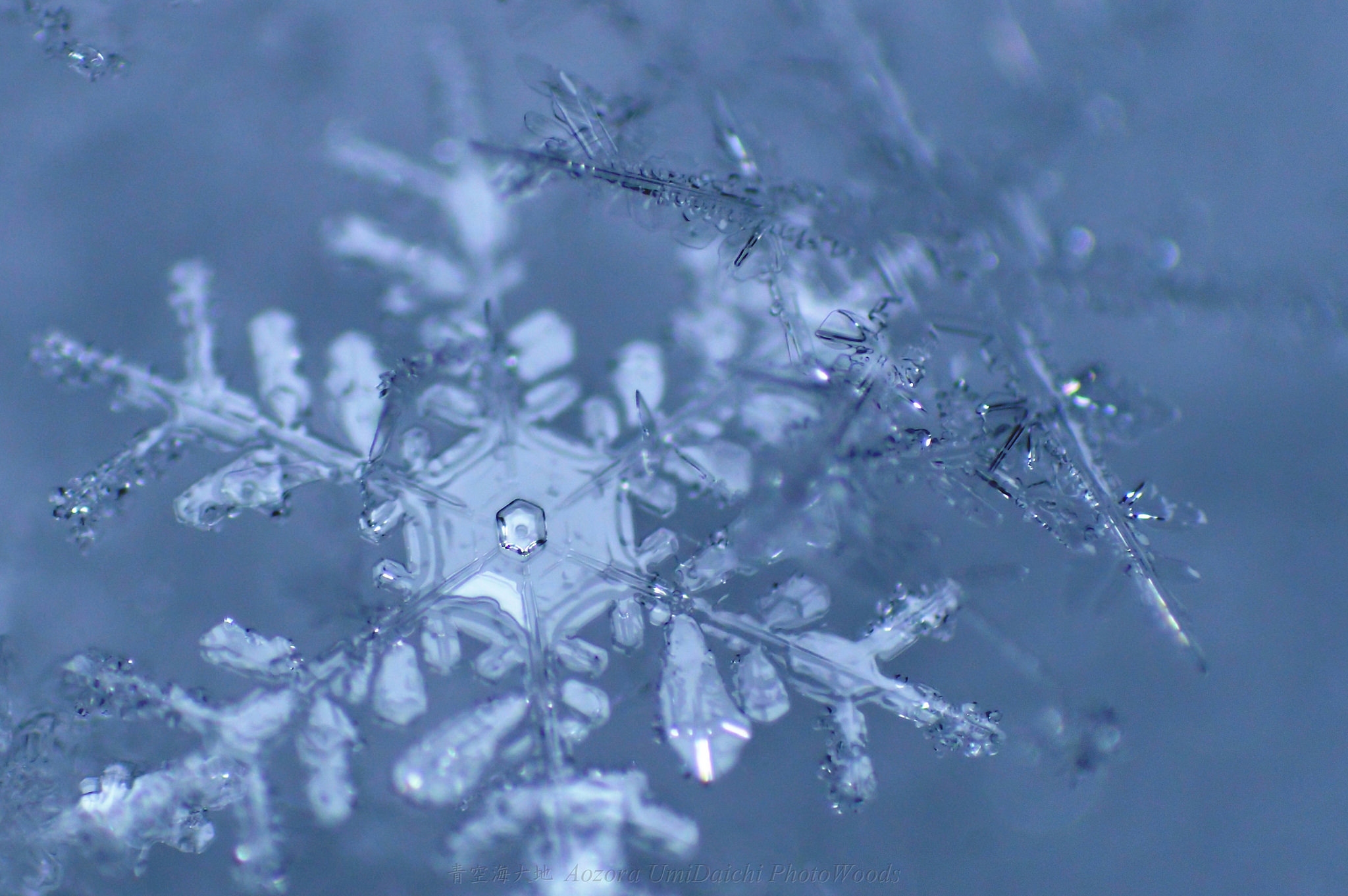 snow crystal https://www.flickr.com/photos/151798735@N05/33574539376/in/album-72157680437808676/